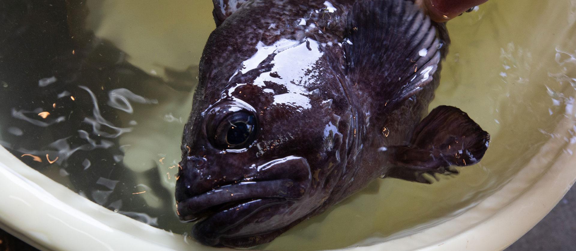 とれたての魚2